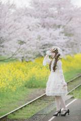 DSC_9539 (nana_tsuki) Tags: