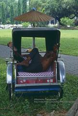Penang, Rickshaw driver (blauepics) Tags: city man work sleep indian malaysia stadt vehicle mann penang rickshaw schlafen arbeit malay fahrzeug indische rickscha