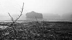 New England Shores (BlueisCoool) Tags: blackandwhite bw lake nature water fog dark landscape outdoors island photography photo pond flickr foto image outdoor massachusetts sony spiderweb foggy picture newengland cybershot capture plainvillemassachusetts turnpikelake dscw300 newenglandshores
