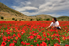Campo de amapolas-alazores- (Lucas Gutirrez) Tags: familia rojo ani amapolas zafarraya alhamagranada campode granadanatural