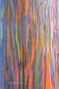Rainbow tree 4 (PIERRE LECLERC PHOTO) Tags: life trees tree nature colors forest wow happy hawaii amazing rainbow colorful natural awesome joy happiness bark kauai eucalyptus magical rainbowtree pierreleclercphotography