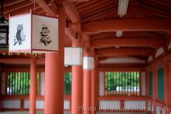 Silent (Y.Murakamin) Tags: nikon snap saitama d810 nokton5814