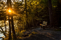 Sit with me (Vanili11) Tags: light sunset sunlight bench dappled sunbeams dappledlight