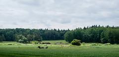 Country (P. Burtu) Tags: sweden sverige svensksommar sommar summer sollentuna countryside landet landsbygd bondgrd bgsgrd vsbygrd trd tree hst horse jrvafltet