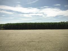 Granturco (Alessandro Banducci * Ganaverre) Tags: sky cloud nuvole estate mais cielo campo gran asfalto pianura sugimoto agricoltura contadino turco padana granoturco cadeo