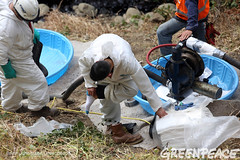 Setting Up Pumps for Oil Spill (Greenpeace USA 2016) Tags: oil spill pipeline fossilfuel ventura california pollution cleanup crude ca usa