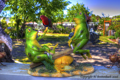 Frogs@Play (fishmonger45) Tags: hdraddicted hdr tonemapped frogs