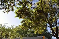 El brillo de la maana (spawn5555) Tags: city naturaleza verde garden mexico photography nikon arboles cotidiano ciudad albero mexicano aguascalientes jardn fotografa d3000