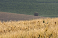 colline senesi (stefano_galeotti) Tags: paesaggio colline senesi