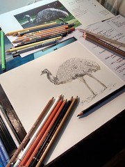 Drawing an Emu (Esteban Candia) Tags: draw drawing onpaper pencils illustration animal emu bird birds bigbird australia oceana argentina buenosaires temaiken temaikn