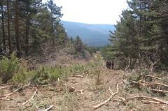 Senda de los Peregrinos (Historia de Covaleda) Tags: espaa spain fiesta paisaje douro pinos soria historia pinar tradicion duero covaleda