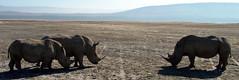 East Africa 071 (tapetevoador viagens) Tags: tanzania safari rafting zanzibar uganda moambique africadosul qunia fica
