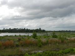 Bogs at Whitesbog (Christine_Ray) Tags: whitesbogvillage belleplaincapemayandparvin