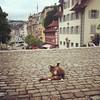 Lucerne Cat