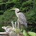Crescent L - blue heron - N Kimble
