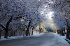 color en la nieve (.el Ryan.) Tags: argentina nikon nevada 85mm paisaje colores mendoza lente 2013 chacrasdecoria mprimir