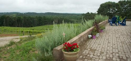View of vineyard