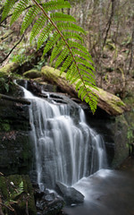 waterfallin () Tags: longexposure trees white fern tree green wet water dark waterfall rainforest slowshutter tasmania hobart huon neika stricklandavenue stricklandfalls