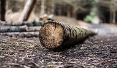 Cutting trees (Caithness Photos) Tags: trees grass forest scotland caithness dunnet dunnetforest