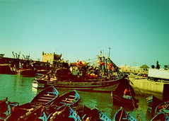 (auspices) Tags: fish film 35mm xpro cross morocco chrome elite process essaouira