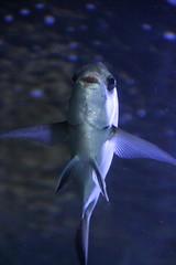 Fish (Anura in Canberra) Tags: sea fish valencia aquarium spain oceanografic