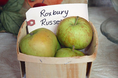 "Roxbury Russet <a style=""margin-left:10px; font-size:0.8em;"" href=""http://www.flickr.com/photos/91915217@N00/10302950806/"" target=""_blank"">@flickr</a>"