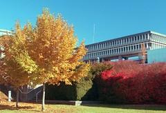 Academic Quadrangle Autumn 2 (jvde) Tags: 3570mmf3345nikkor burnaby coolscan film nikon nikonfe sfu gimp