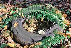 une page de pub en attendant le 8 !! (pontfire) Tags: wood autumn france nature forest automne natural normandie normandy michelin pneu fort bois poubelle feuille eure fougres lemesniljourdain hameaudecaillouet