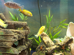 clean-fish-tank-maintenance-aquarium-expert-sarasota-fl-12 (thefishbowlfl) Tags: fish design florida outdoor indoor fresh exotic maintain maintenance tropical sarasota fl care custom build install tanks saltwater expert aquariums