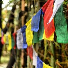 Tibetan prayer flags (radhical) Tags: square squareformat ratangad harishchandragad bhandardara kalsubai kokankada iphoneography instagramapp uploaded:by=instagram