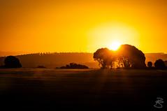 Golden Sunset (medXtreme) Tags: sunset sun tree silhouette sonnenuntergang australia tasmania australien tassie sonne schatten baum profil tasmanien schattenriss kontur schattenbild umriss commonwealthofaustralia narawntapunationalpark asbestosrangenationalpark vandiemensland springlawn umrisslinie australienkontinent lutriwita tasmaniasserengeti