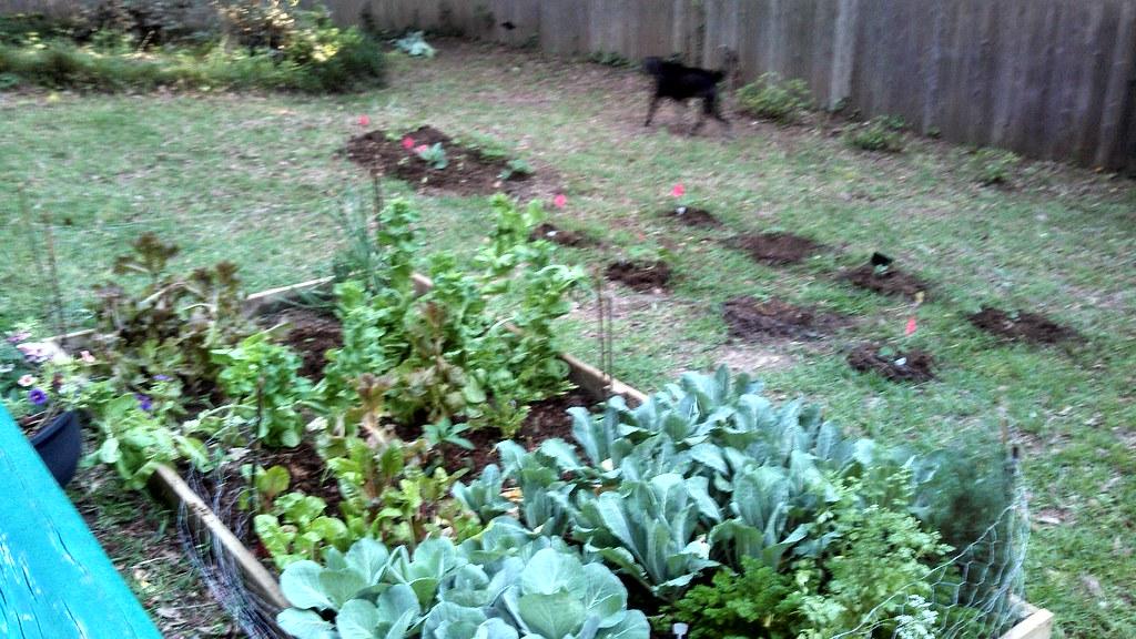 IMG_20130512_185624_336 (Equina27) Tags: Garden Texas Gardening Tx
