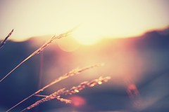 E n d l e s s  F e e l i n g s (ose) Tags: light sunset summer sun france love nature girl canon outside 50mm golden countryside mood dof bokeh pastel beyondbokeh canoneos550d
