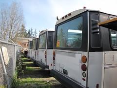 1991 Orion 1.508 #442 443 439 467 (busdude) Tags: light bus 1 authority central rail transit sound orion link pierce tacoma regional puget soundtransit piercetransit orion1 centralpugetsoundregionaltransitauthority