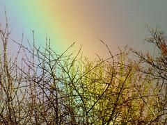 Rainbow behind the tree (captain_flynn23) Tags: trees sky rain shower rainbow miltonkeynes cloudy buckinghamshire stormy colourful mk beanhill