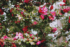 Kyoto trip, Japan- (Liisa Toomus) Tags: travel flowers winter snow art japan portraits canon photography 50mm spring kyoto asia wanderlust