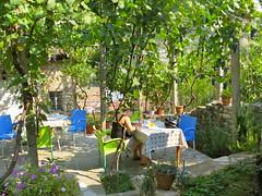 Lien in de tuin bij het guesthouse