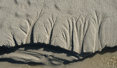 Seashore Treescape ( Catriona Walker) Tags: trees abstract beach sand argyll patterns dendriticdrainage catrionawalker