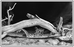 Dead Alien Trees (smithat) Tags: california unitedstates deathvalley topazdetail topazremask topazbweffects