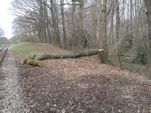 tree finally chopped