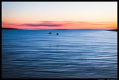 Panning (Joni Kantonen) Tags: sea nature water birds landscape horizon wide balticsea panning archipelago panned utö