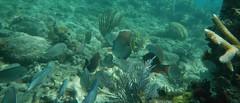 Culebra, Puerto Rico (tquist24) Tags: fish beach water coral geotagged puerto island puertorico rico snorkeling culebra tamarindo tropical february 2013 tamarindobeach nikoncoolpixaw100