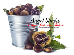 https://www.facebook.com/fotografiasconsabor (Angel Simon) Tags: autumn winter food brown white macro tree cooking nature leaves closeup fruit tin leaf bucket healthy european branch natural skin bur background branches nuts harvest bowl seeds american chestnuts crop snack organic copyspace agriculture burr edible isolated spiny asiatic nutrition ingredient harvesting ecologic cupule