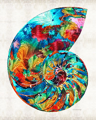 Colorful Nautilus Shell by Sharon Cummings (BuyAbstractArtPaintingsSharonCummings) Tags: ocean california blue sea summer vacation shells house abstract geometric beach home nature water beautiful seashells rainbow colorful aqua seasons natural bright florida miami large shell northcarolina canvas coastal maritime beaches tropical seashell fractal sarasota geometrical fractals bradenton perfection beachhouse primarycolors eastcoast nautilus aquashell nautilusshell beachhome sharoncummings colorfulshells abstractshell