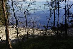 Pinse 2016 (dese) Tags: sea norway strand coast spring sunday may mai fjord scandinavia hordaland fjre vr vestlandet sj pfingsten noreg pentecost fusa 2016 whitsun skandinavia pentecte pinsen vinnes whitesunday pinse bjrnefjorden pentecosts 2016 may15