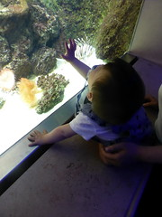 antwerp_4_112 (OurTravelPics.com) Tags: max coral zoo aquarium with antwerp lionfish