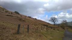 Mountainside (HJA Pics) Tags: mountain tree fence mountainside barren isolated