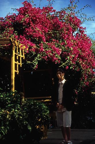"""Ägypten 1999 (066) Assuan: Botanischer Garten, Elnabatat's Island • <a style=""""font-size:0.8em;"""" href=""""http://www.flickr.com/photos/69570948@N04/26562255724/"""" target=""""_blank"""">View on Flickr</a>"""