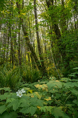 golden light (westernforesters) Tags: portland event salmonberry lush forests goldenlight tillamookstateforest wflcspring2016