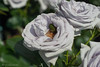 CRW_8305 (kisugi802) Tags: eosd60 2016 長居植物園 20160521